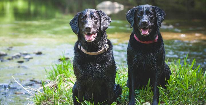 Dog friendly self catering in North Devon